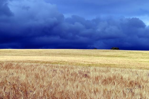 Graanlandschap op een stormachtige dag in het natuurpark valderejo. baskenland. spanje