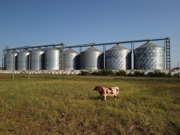 Graanlift metalen graanelevator in landbouwzone landbouwopslag voor oogstgraan