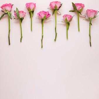 Gradiënt roze rozen arrangement met kopie ruimte