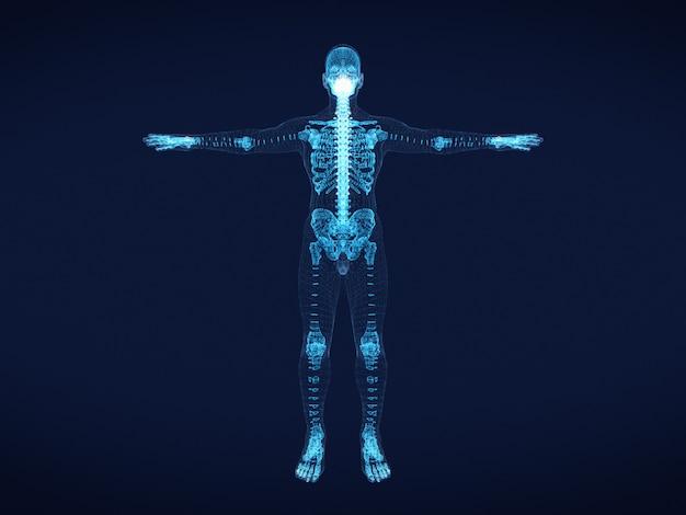 Grafische draadframe afbeelding van menselijk skelet