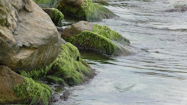 Graniet steen begroeid met mos in het water