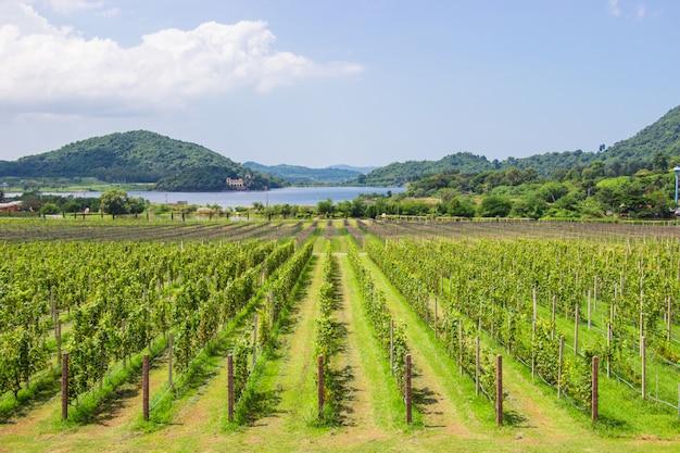 Grape boerderij en tuin bij het meer en de bergen is de populaire toeristische bestemming van pattaya.