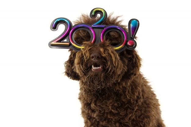 Grappig hond nieuw jaar die tekstgrassen dragen die op wit worden geïsoleerd