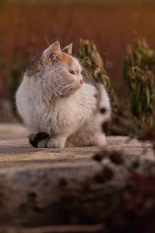 Grappig katje in gele herfstbladeren. kat spelen in de herfst met gebladerte. brits katje in gekleurde bladeren op aard.