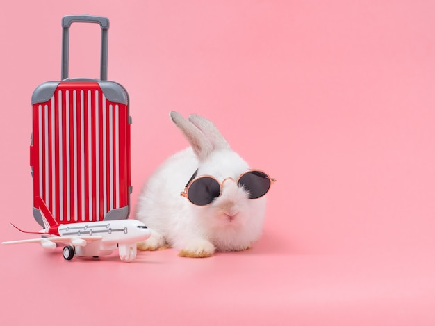 Grappig konijn die zonnebril en de rode bagage, vliegtuig dragen die op vakantie gaan.
