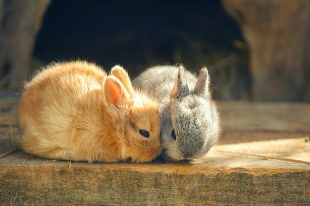 Grappig konijn op houten vloer.