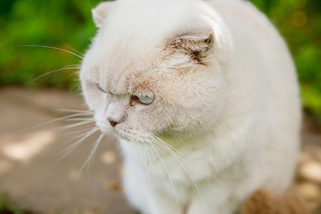 Grappig kortharig binnenlands wit katje dat door de groene achtergrond van de gerass-achtertuin sluipt