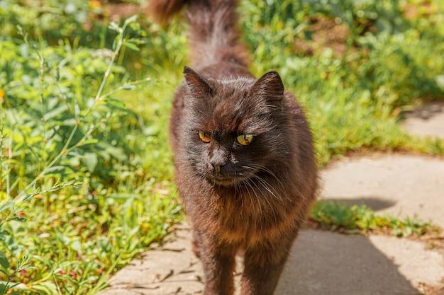 Grappig portret van langharige binnenlandse bruine kitten op groene achtertuin achtergrond