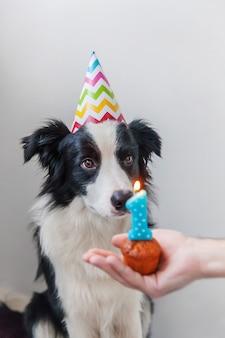 Grappig portret van leuke glimlachende puppyhond die border collie verjaardags dwaze hoed dragen die cupcake vakantiecake bekijken met nummer één kaars op wit wordt geïsoleerd