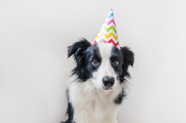 Grappig portret van leuke smilling puppyhond die border collie verjaardags dwaze hoed dragen die camera bekijken die op witte achtergrond wordt geïsoleerd. gelukkige verjaardag partij concept. het grappige leven van huisdierendieren.