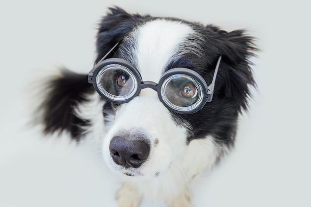 Grappig portret van puppy hondje border collie in komische bril geïsoleerd op een witte achtergrond. kleine hond die in een bril staart als student-professor-dokter. terug naar school. coole nerdstijl. grappige huisdieren.