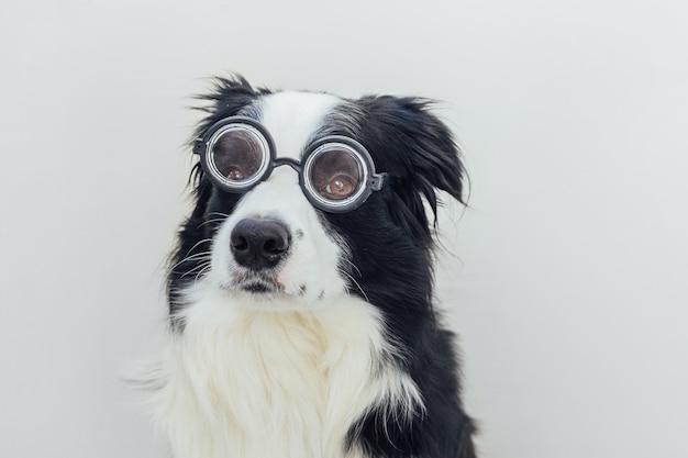 Grappig portret van puppy hondje border collie in komische bril geïsoleerd op witte achtergrond weinig ...