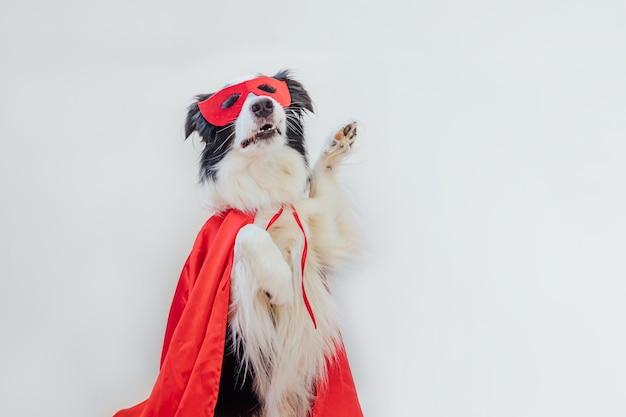 Grappig portret van schattige hond border collie in superheld kostuum geïsoleerd op een witte achtergrond. puppy met rood superheldenmasker en cape in carnaval of halloween. justitie helpt kracht concept