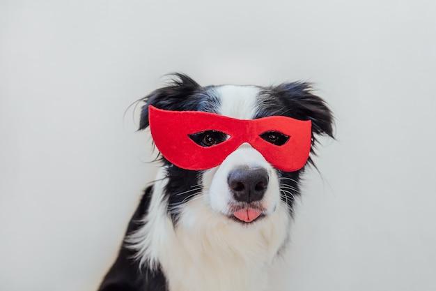 Grappig portret van schattige hond border collie in superheld kostuum geïsoleerd op een witte achtergrond. puppy met rood superheldenmasker in carnaval of halloween. justitie helpt kracht concept.
