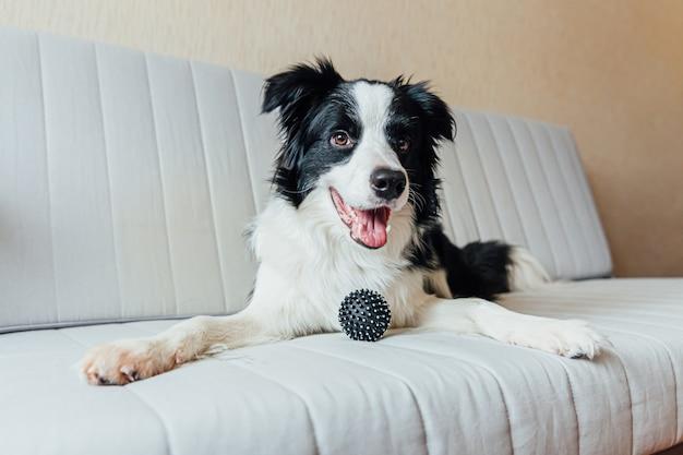 Grappig portret van schattige lachende puppy hondje border collie spelen met speelgoed bal op de bank binnenshuis