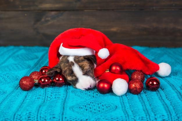 Grappige basenji puppy hondje in kerstmuts zit met rode kerstballen. winter kerstmis of nieuwjaar kaart achtergrond