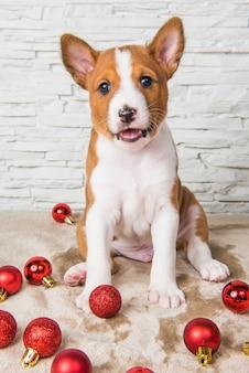 Grappige basenji puppy hondje speelt met rode kerstballen