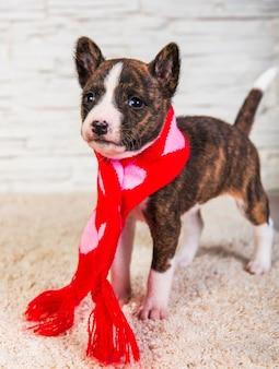 Grappige basenji-puppyhond in santasjaal met harten