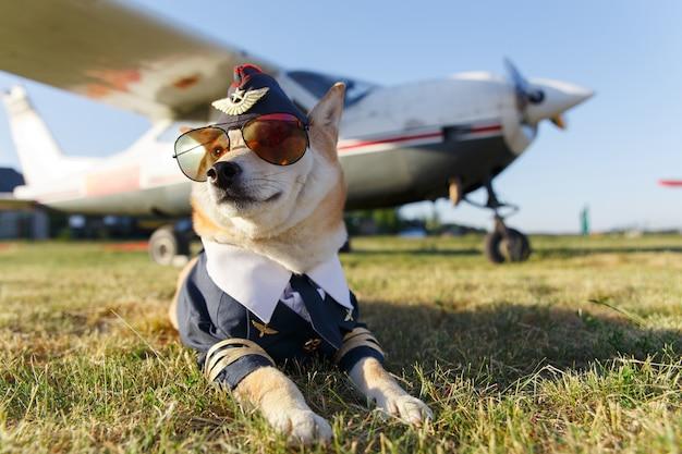 Grappige foto van de shiba inu-hond