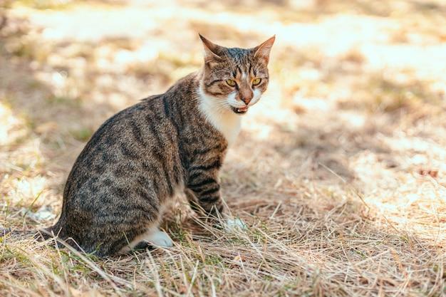 Grappige gestreepte grijze volwassen kat met lange snor zit op het gras in het park