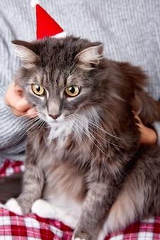 Grappige grijze kat in rode kerstman hoed