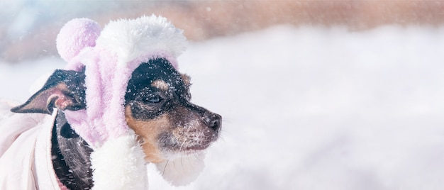 Grappige hond, close-upportret in sneeuwweer in openlucht, bannerachtergrond