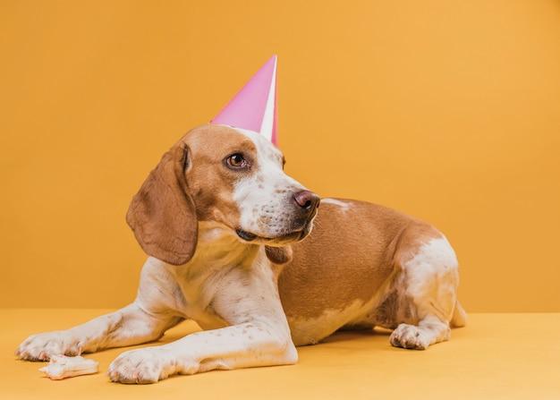 Grappige hond die een feesthoed draagt