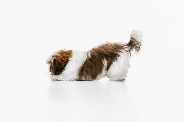 Grappige hond geïsoleerd op wit