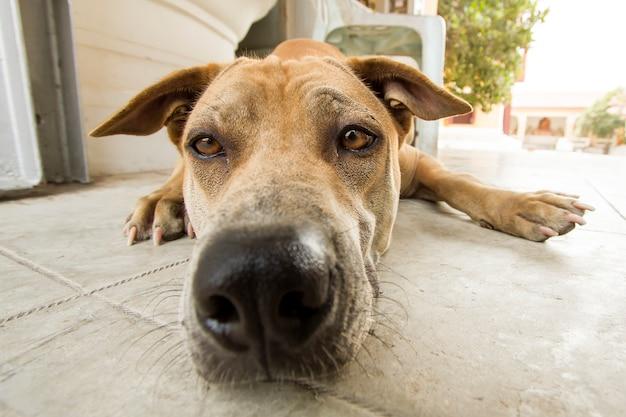 Grappige hond grote neus