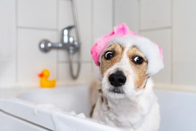 Grappige hond in de badkamer met een pantoffel op zijn hoofd huisdier neemt een douche Premium Foto