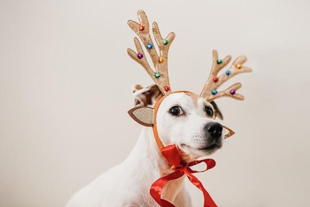 Grappige hond in een hertenkostuum met gewei, voorbereiding op het feest, maskerade
