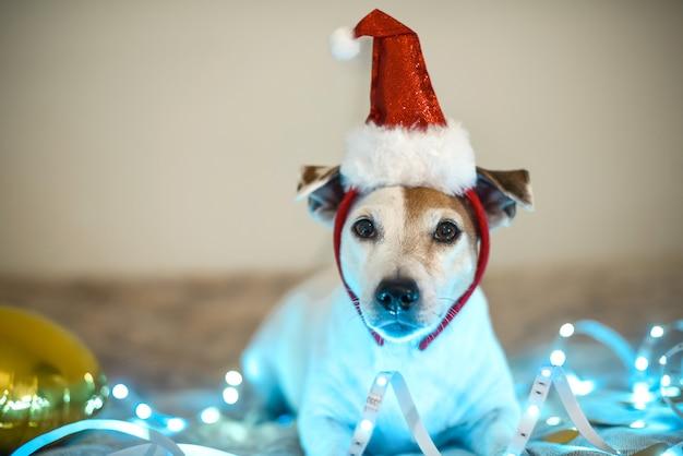 Grappige hond in een kerstmuts, kostuum voor een gemaskerd feest