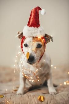Grappige hond in een nieuwjaarsmuts, sprankelende slinger, een kostuum voor een kerstfeest