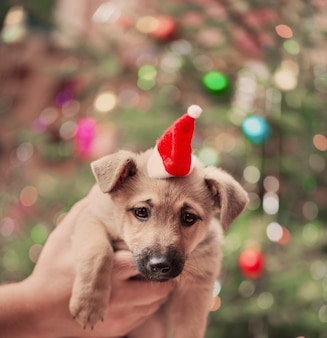 Grappige hond op achtergrond kerstboom