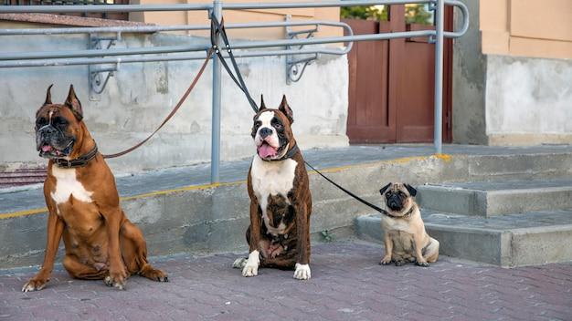 Grappige honden vastgebonden op straat