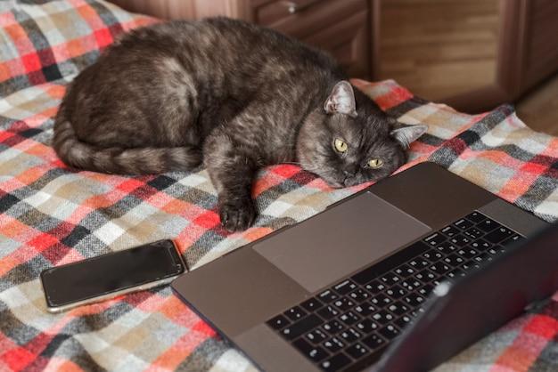 Grappige kat doet alsof hij laptop gebruikt