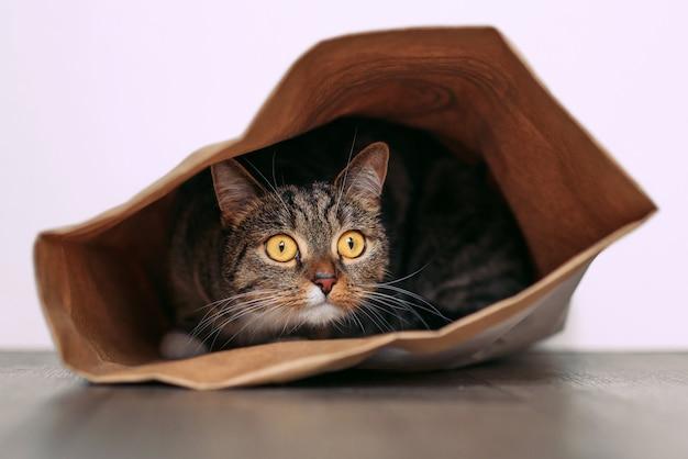 Grappige kat met grote gele ogen kijkt uit nieuwsgierigheid uit een ambachtelijke papieren zak. grappige huisdieren die thuis spelen. kat zit in een papieren zak.
