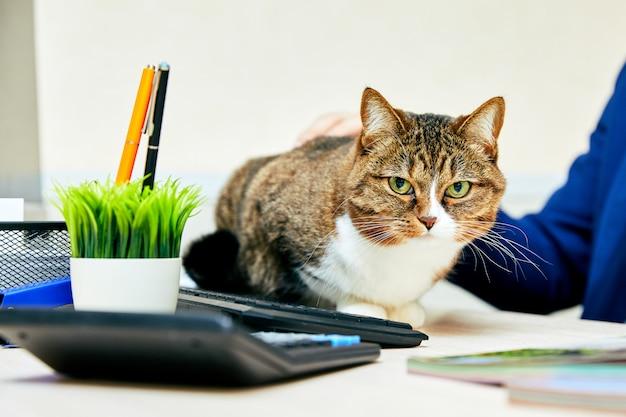 Grappige kat met in office. zakelijke scène.