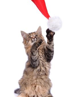 Grappige kat met kerstmisspeelgoed dat op wit wordt geïsoleerd