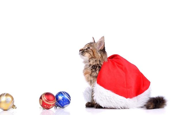 Grappige kat met speelgoed van het nieuwe jaar geïsoleerd op wit