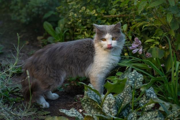 Grappige kat op het gras met uit tong
