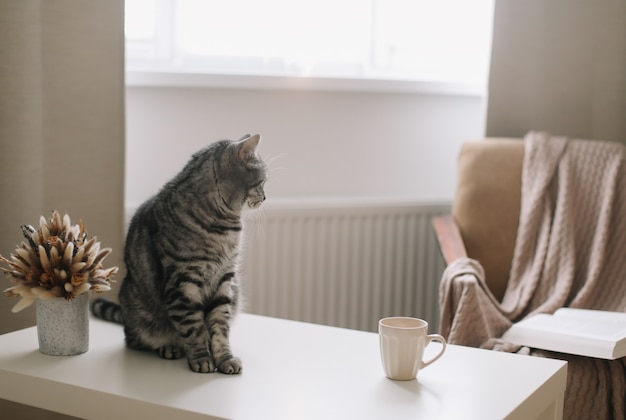 Grappige kat op hygge achtergrond thuis at