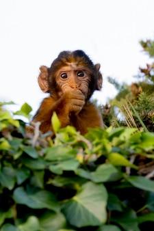 Grappige kleine aap behinde veel bladeren