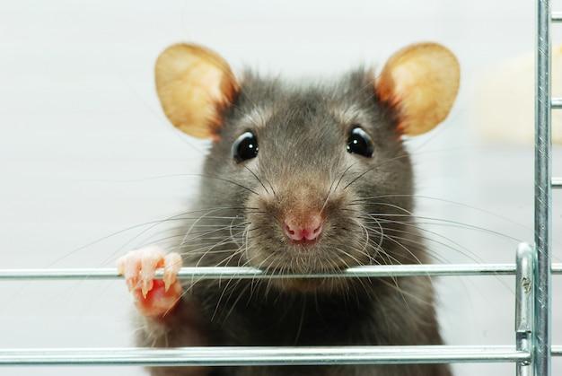 Grappige muis op een kooi