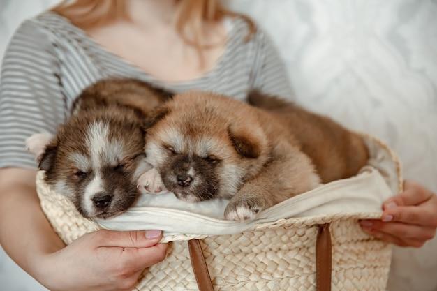 Grappige pluizige puppy's in een gezellige mand in de handen van de eigenaar