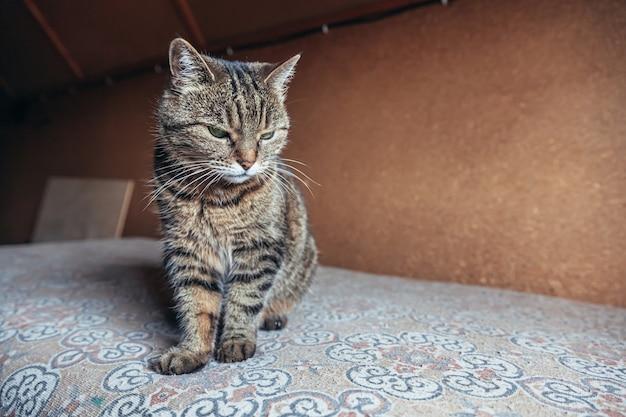 Grappige portret arrogante kortharige binnenlandse cyperse kat thuis ontspannen