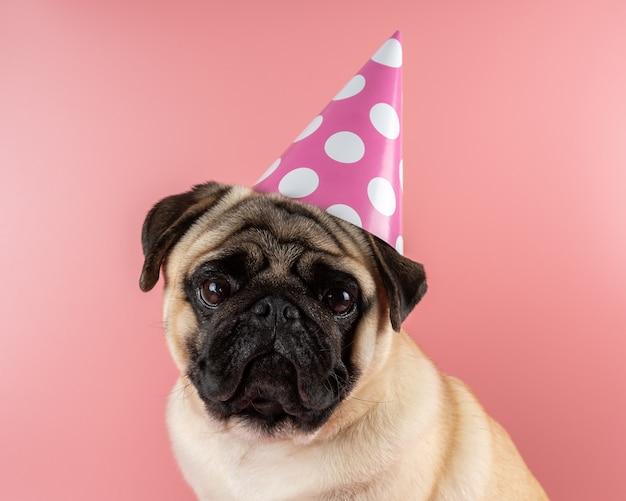 Grappige pug-hond die gelukkige verjaardagshoed op roze achtergrond draagt.