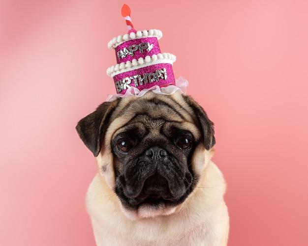 Grappige pug hond die roze gelukkige verjaardagshoed op roze achtergrond draagt.