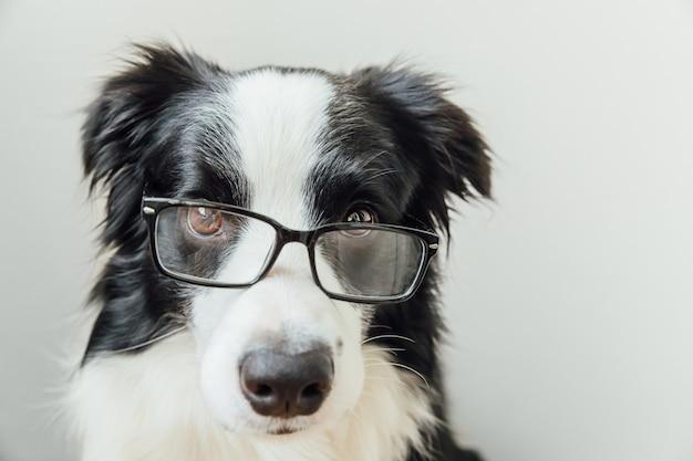 Grappige puppy hond border collie in bril geïsoleerd op een witte achtergrond
