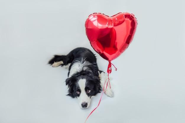 Grappige puppy hond border collie met rode hart ballon in poot geïsoleerd op een witte achtergrond